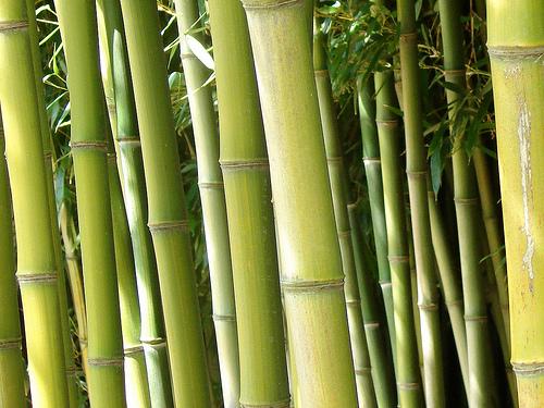 bamboo の複数形は?