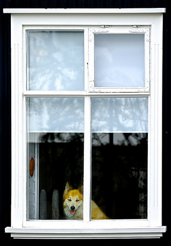 photo credit: Jamie McCaffrey How much is that doggie in the window? via photopin (license)