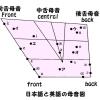 日本語の母音と英語の母音の関係