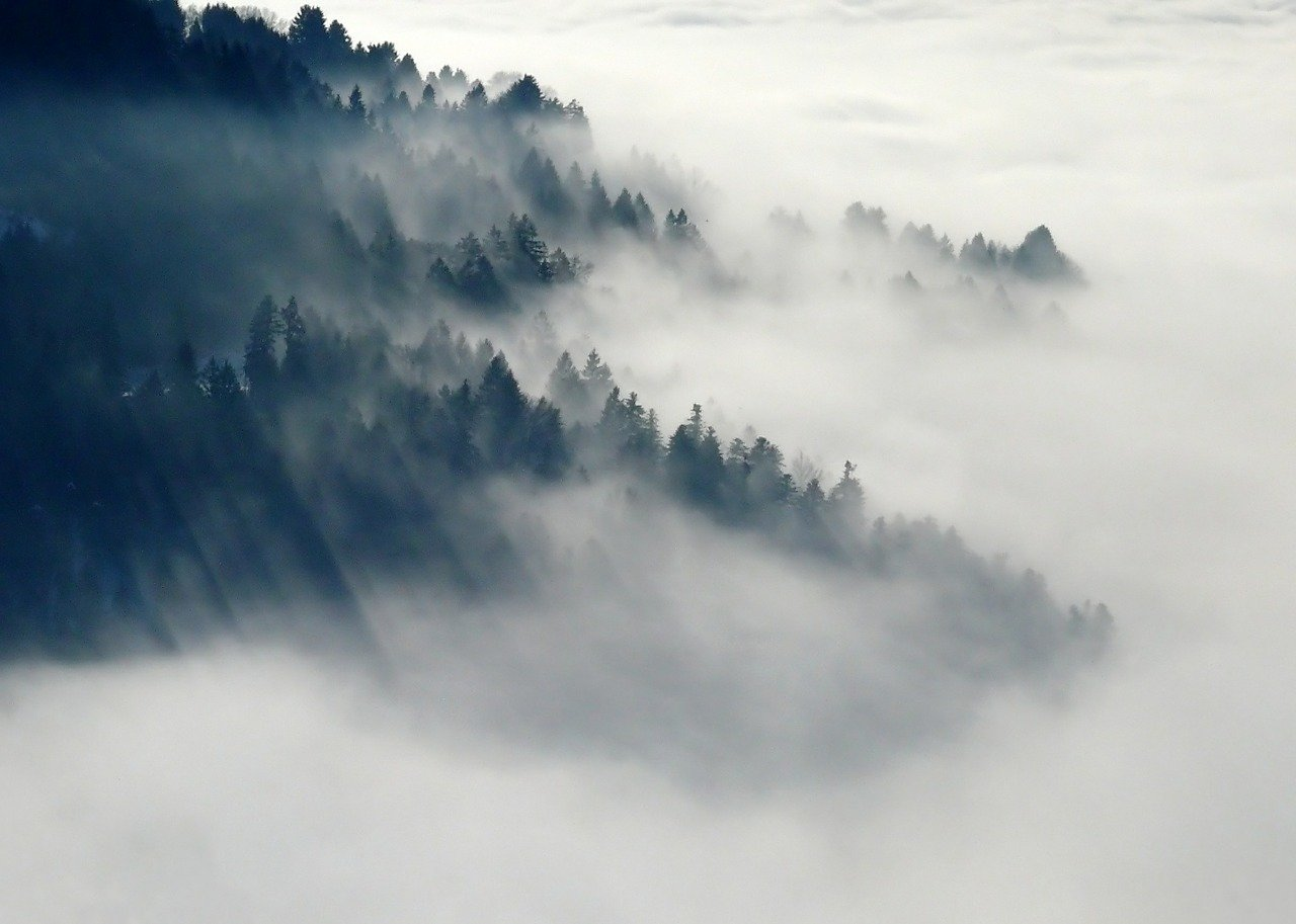 haze, mist, fog の違い